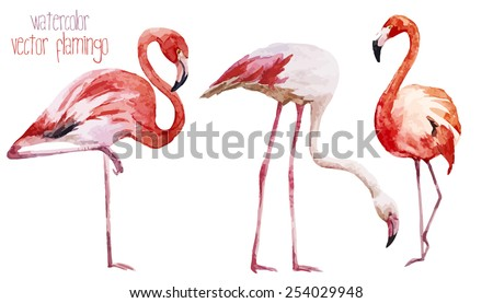 watercolor, vector, flamingos - stock vector