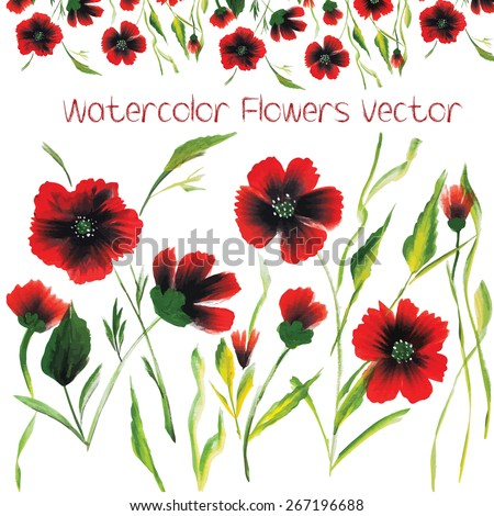 Watercolor Vector Flower. Watercolor poppies collection. Ornamental pattern composition. Watercolor flowers blooming background and color watercolor flowers. Watercolor flowers garden romantic branch.