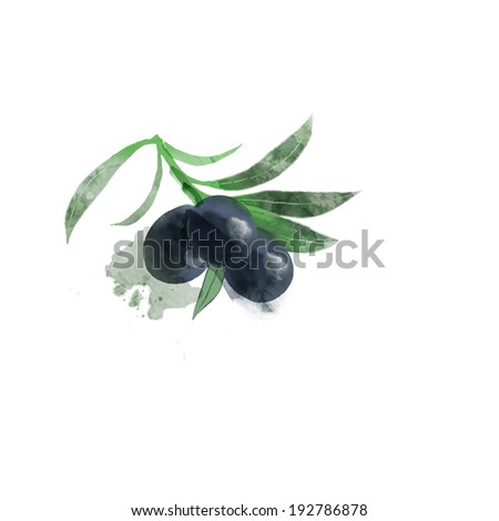 watercolor vector olive