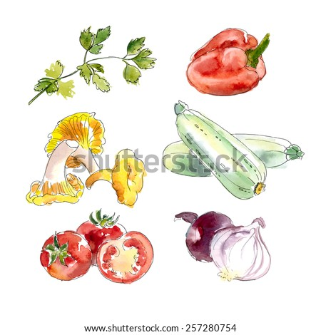 Watercolor Vegetable Collection. Hand painted Illustration isolated on white / Vector illustration