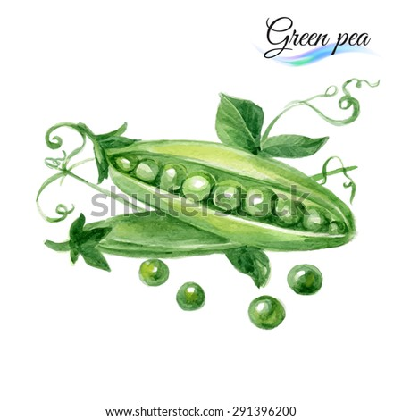 Watercolor vegetables green pea isolated on white background - stock vector