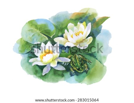 Watercolor white water-lilly flowers pattern with frog on pond vector illustration - stock vector