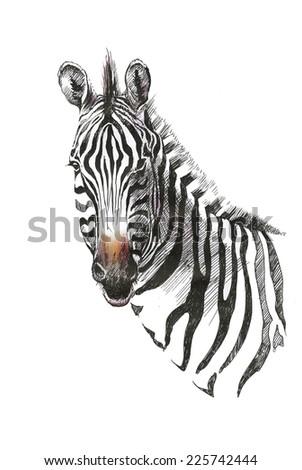 Watercolor zebra isolated on white background vector illustration - stock vector