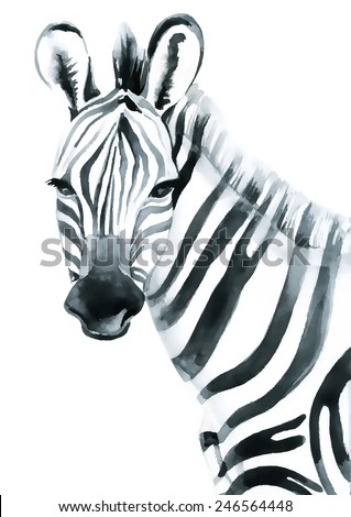 Watercolor zebra isolated on white background. Vector illustration - stock vector