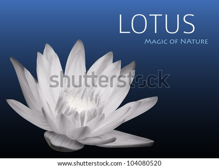 Waterlily Background Vector Design - stock vector