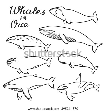 Whales and orca set. Hand-drawn cartoon collection of sea mammals - killer, sperm, blue, humpback, grey, fin, bowhead whales and cachalot. Doodle drawing. Vector illustration - stock vector