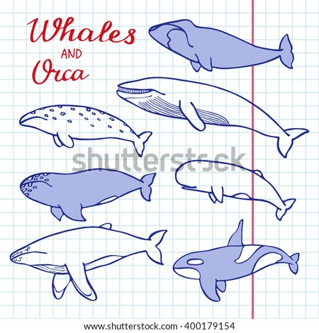 Whales and orca set. Hand-drawn cartoon collection of sea mammals - killer, sperm, blue, humpback, grey, fin, bowhead whales and cachalot. Doodle pen drawing on the notebook page. Vector illustration - stock vector