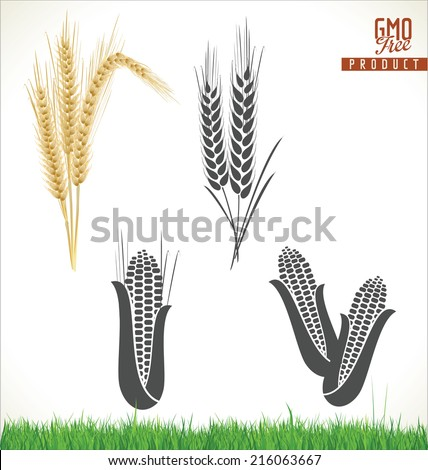 Wheat and corn