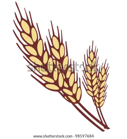 Wheat ear. Vector illustration - stock vector