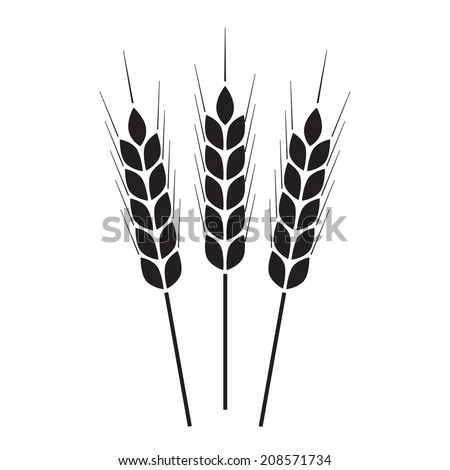 Wheat ears icon or sign. Agricultural symbol on white background. Design element for bread packaging or beer label. Vector illustration. - stock vector