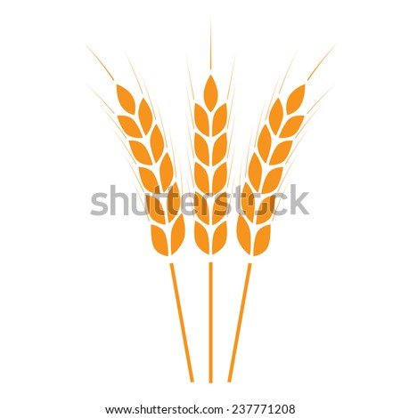 Wheat ears icon or sign. Crop symbol on white background. Design element for bread packaging or beer label. Vector illustration.  - stock vector