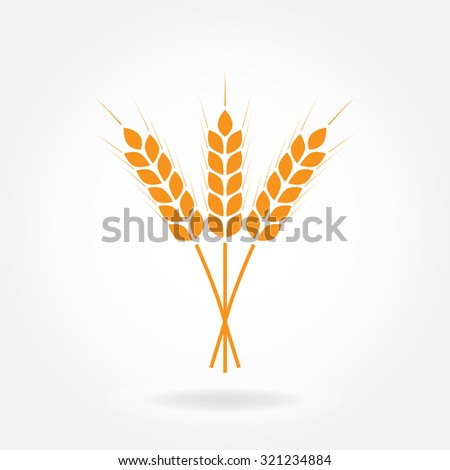 Wheat ears or rice icon. Crop, barley or rye symbol isolated on white background. Design element for beer label or bread packaging. Vector illustration. - stock vector