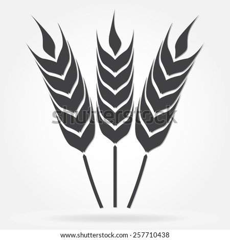 Wheat ears or rice symbol. Agriculture icon isolated on white background. Design element for bread packaging or beer label. Vector illustration. - stock vector