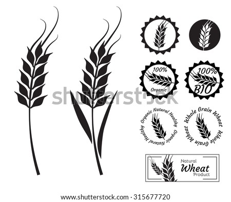 Wheat set or collection in vector - stock vector