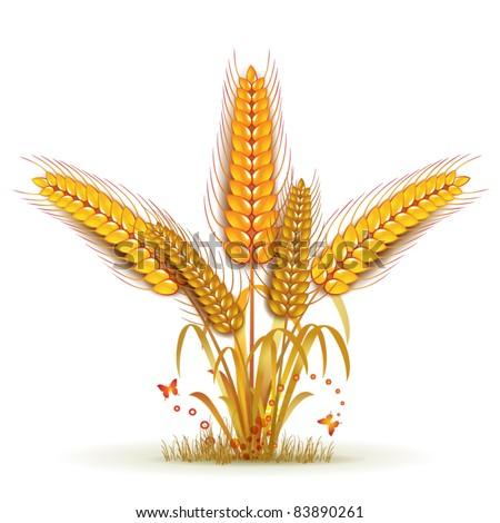 Wheat sheaf arrangement - stock vector