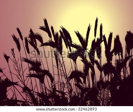 wheat silhouette against sun - stock vector