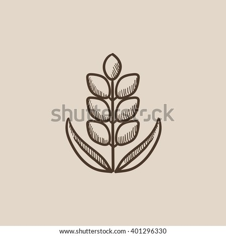 Wheat sketch icon. - stock vector