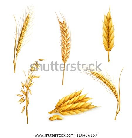 Barley Stock Images, R...