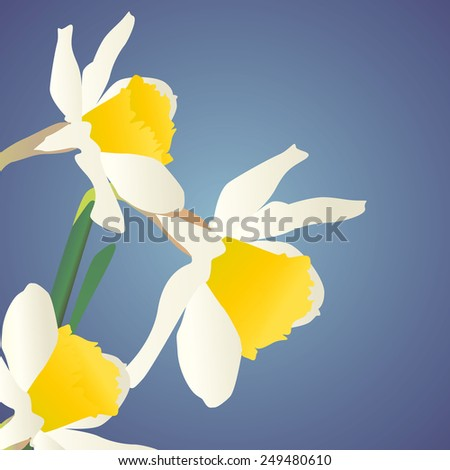 white daffodils on dark blue background - stock vector
