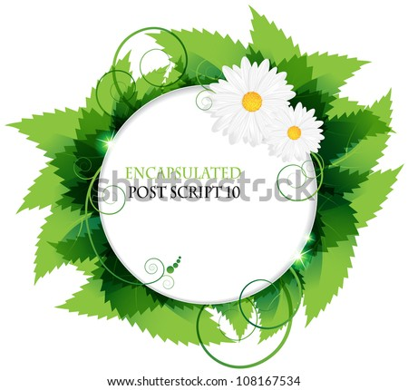 white daisies and lush foliage on a white background - stock vector