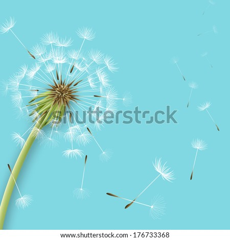 White dandelion with pollens isolated vector illustration