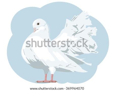 White dove. Vector illustration - stock vector