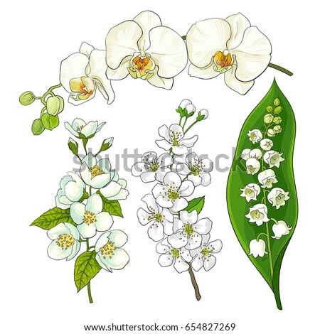 white flower set lily valley orchid stock vector 654827269