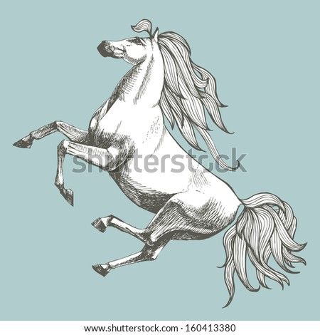 White horse. Hand drawn vector illustration. Can be used separately from your design.
