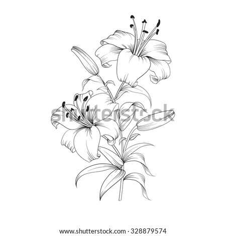 White lily isolated on a white background. Card with blooming lily. Vector illustration. - stock vector