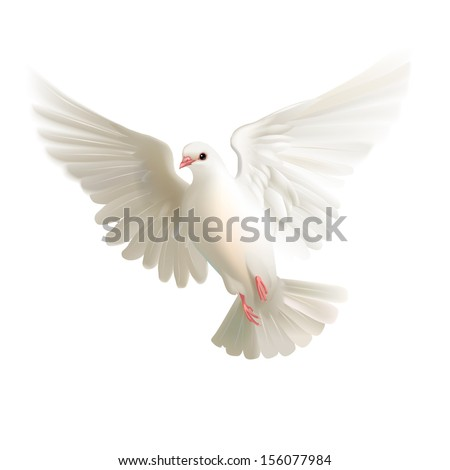 White pigeon isolated - stock vector