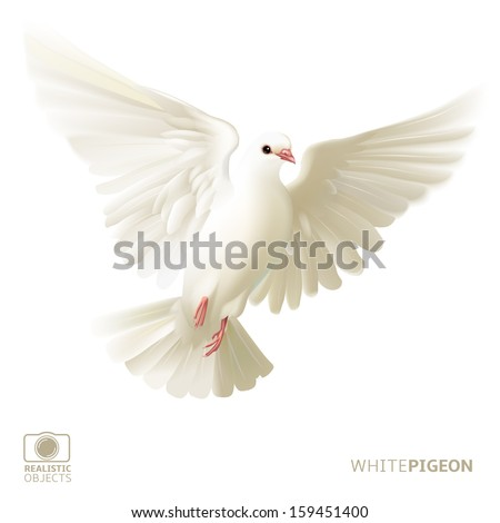 White pigeon, version 2.0, isolated - stock vector