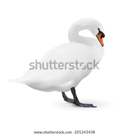 White swan isolated on white background with a shadow, vector image  - stock vector
