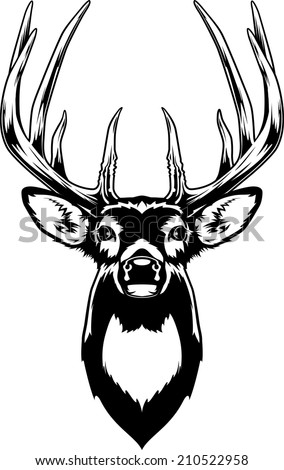 Whitetail Deer Head. Vector Illustration of a Whitetail Deer Head. - stock vector