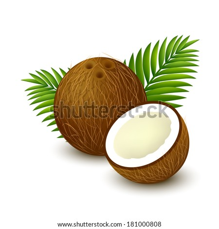 Whole coconut with piece and palm leaves on white background. Vector illustration.