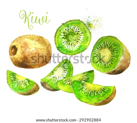 Whole Kiwi Fruit and his Sliced Segments  Isolated on White Background. Watercolor Vector Illustration. ( Each Sliced Segment is Isolated ).