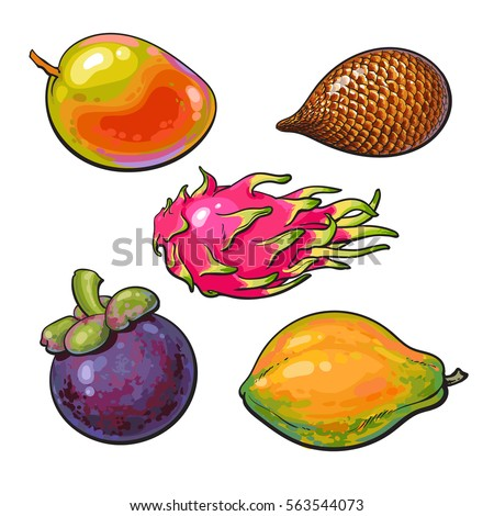 Whole mango, papaya, mangosteen, salak, pitaya tropical fruit, sketch vector illustration isolated on white background.