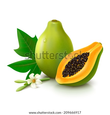 Whole papaya with slice, flower and leaf isolated on white background. Vector illustration
