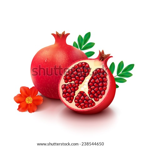 Whole pomegranate with half, flower and leaves isolated on white background. Vector illustration. - stock vector