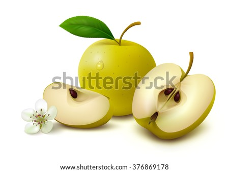Whole yellow apple with leaf, half of apple, slice of apple and flower isolated on white background. Vector illustration.