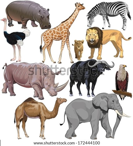 Wild animals from African continent. Vector illustration