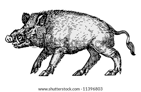 wild boar vector - stock vector