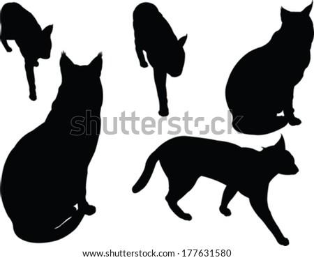 wild cats collection - vector - stock vector