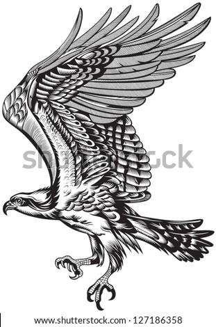 Wild Predatory Bird - stock vector