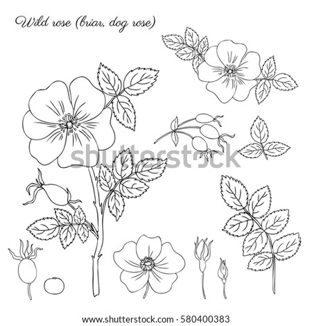 Search moreover Stock Vector Hops Vintage Engraved Illustration La Vie Dans La Nature besides Search Vectors additionally See You At The  mon Ground Festival as well Stock Illustration Blueberry Fruits For Coloring Book. on blueberry garden design html