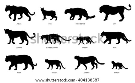 wildcats silhouettes on the white background