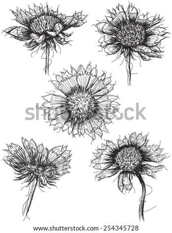 Wildflower sketches - stock vector
