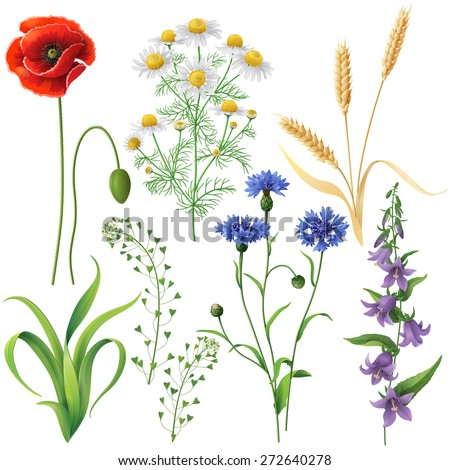 Wildflowers set. Poppy, cornflowers, chamomile, bluebell, blindweed,  wheat ears and  grass  isolated on white. - stock vector