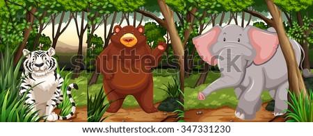 Wildlife animals in the jungle illustration - stock vector