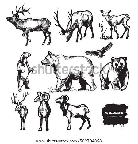 Wildlife. Hand drawn vector silhouettes.