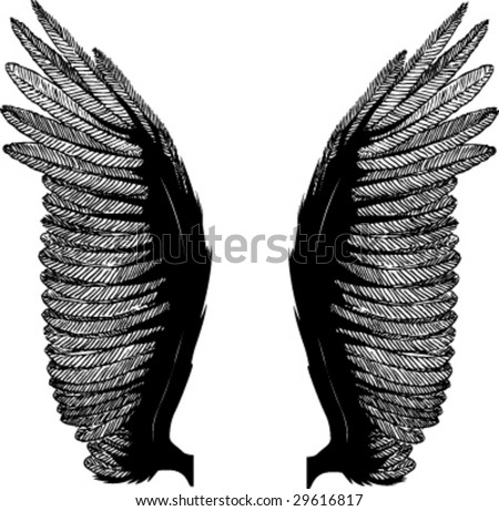 wings isolated on white background - stock vector